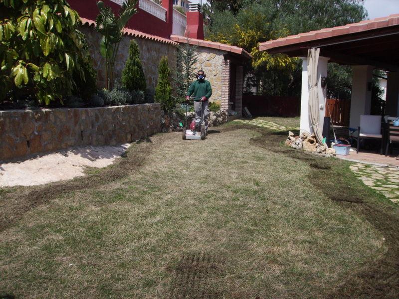 Replantacion De Arboles Frutales En Alicante