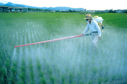 Spraying chemicals on rice crop, Japan